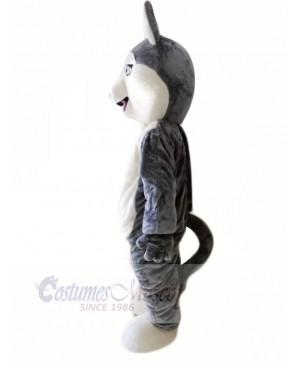 Cute Grey Siberian Husky Dog Mascot Costumes Animal