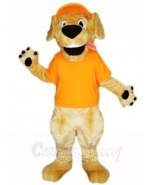 Retriever Dog with Orange Hat and Shirt Mascot Costumes Animal