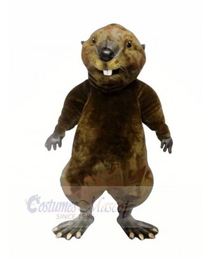 High Quality Otter  Mascot Costumes